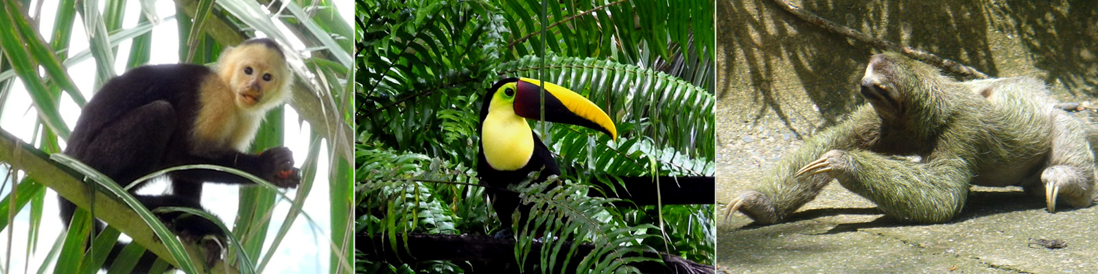 monkeys, toucans, and sloths are found at Drake Bay