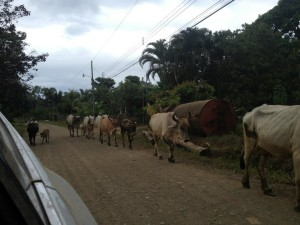 drake bay traffice jam