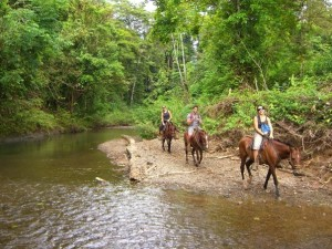 horses on river bank