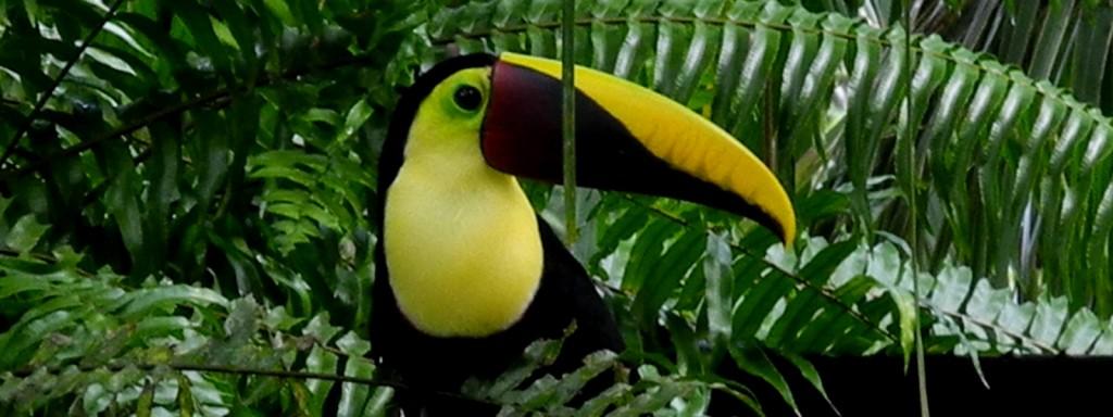 toucan-slider